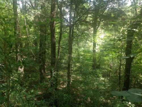 Mahan Creek Homesite : Brierfield : Bibb County : Alabama