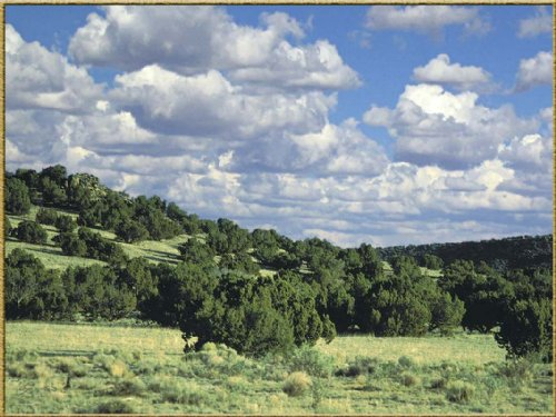 Woodland Valley Ranch Tract  848 : Saint Johns : Apache County : Arizona