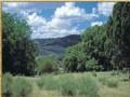 Woodland Valley Ranch Tract  848 : Saint Johns : Apache County : Arizona