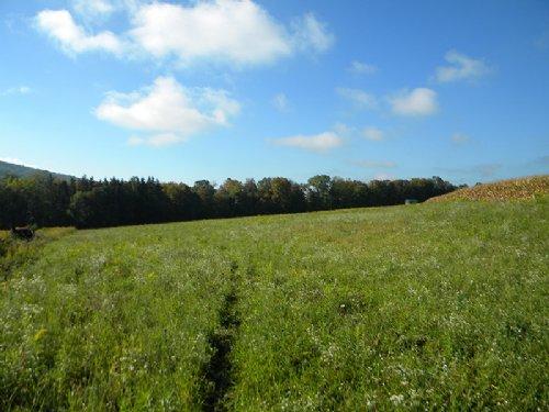 11 Acres Farmland Finger Lakes : Hector : Schuyler County : New York