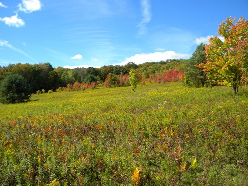 271 Acres Farmland Pasture Pond : Willet : Cortland County : New York
