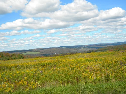 286 Acres Farmland Silo Woods Pond : Willet : Cortland County : New York