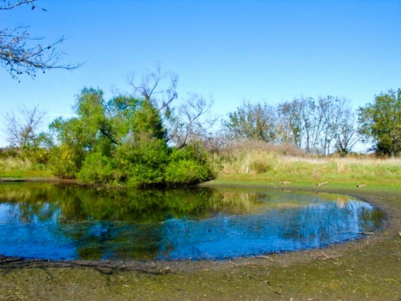 5 acre saddlebrook ranch pond land for sale by owner for Building a 1 acre pond