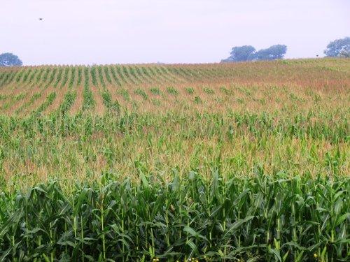 8.5 Acre Homesite Near Huron Sd : Wolsey : Beadle County : South Dakota