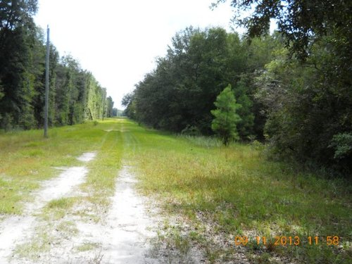 Mixture Of Pasture & Natural Woods : Mcalpin : Suwannee County : Florida