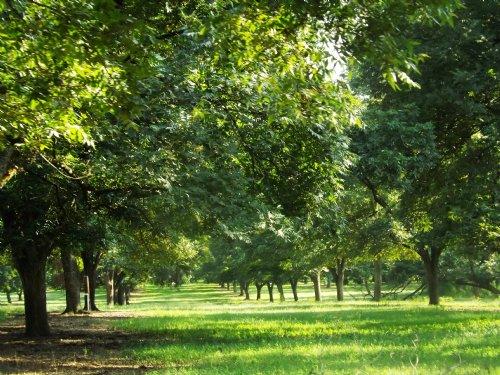 16+/- Acs Smith Healey Tract E : Statesboro : Bulloch County : Georgia