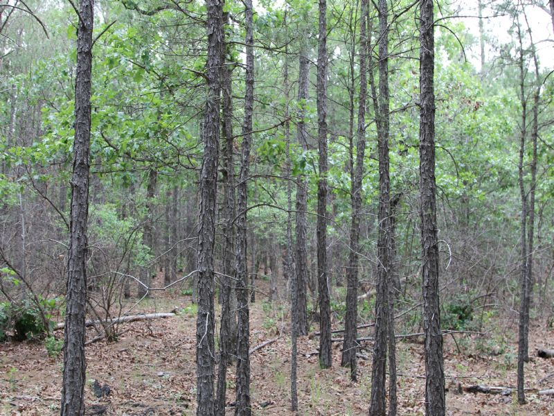 Trophy Ridge Iii Mountain Land : Clayton : Pushmataha County : Oklahoma