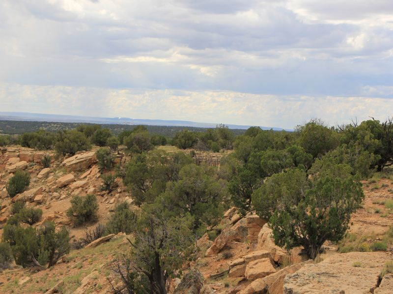 Arizona Ranch Steal $245 Mo. : Saint Johns : Apache County : Arizona
