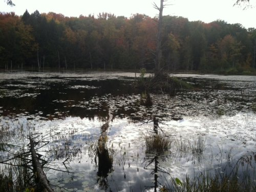 5 Acres Recreational Land Pond : Amboy : Oswego County : New York
