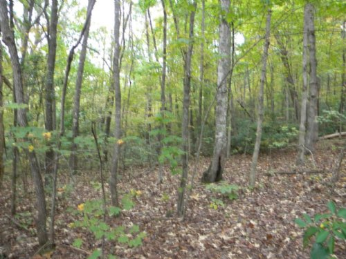 3 Acre Homesite : Travelers Rest : Greenville County : South Carolina