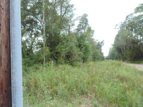 52. 5 Acres (a-421) : Hawthorne : Alachua County : Florida