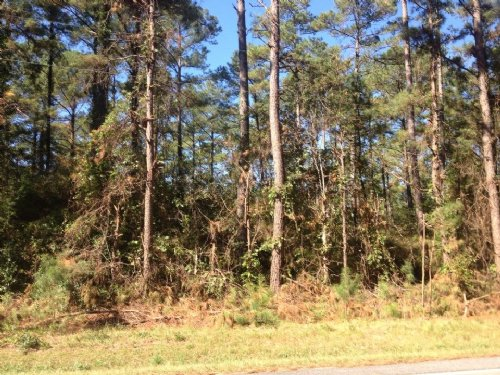 313 Acre - Timber Investment : Laurinburg : Scotland County : North Carolina
