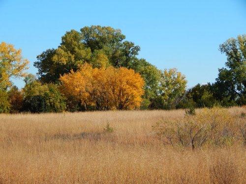 Dejore 80+/- : Turon : Reno County : Kansas
