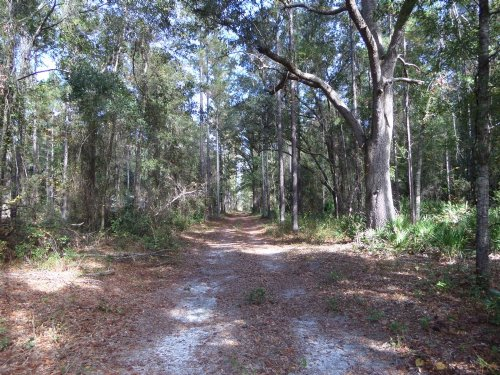 25 Acres With Cabin, Pond, & Pines : Jesup : Wayne County : Georgia