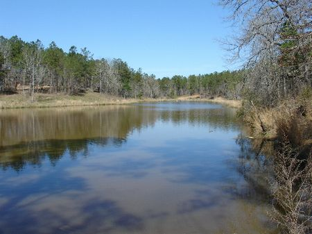 195 Acres : Greenville : Butler County : Alabama