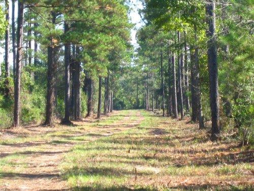 Just Outside Of Kingsland : Kingsland : Camden County : Georgia