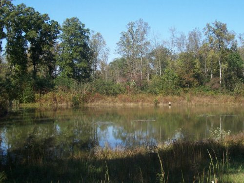 Potential Farm : Homer : Banks County : Georgia