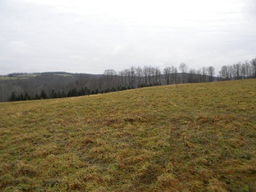 14 Acres Farmland Raise Livestock : Solon : Cortland County : New York