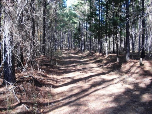 65 Acres Of Timberland : Maben : Oktibbeha County : Mississippi