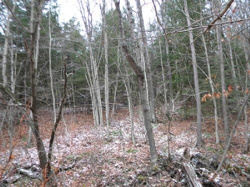 22 Acres Recreational Land Stream : Hornby : Steuben County : New York