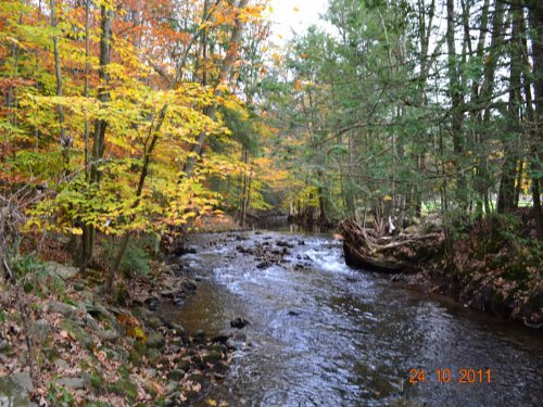 24 +/- Wooded Acres : Benton : Columbia County : Pennsylvania