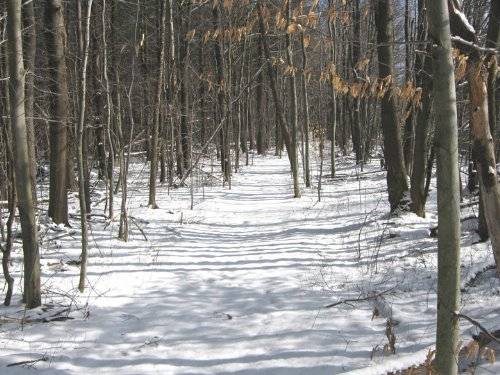 8 Acres Recreational Land Electric : Dryden : Tompkins County : New York