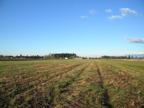 284 Acres Of Level Farmland : Toledo : Lewis County : Washington