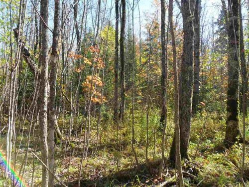Tbd Off Tuski Rd, Mls#1076246 : Bergland : Ontonagon County : Michigan
