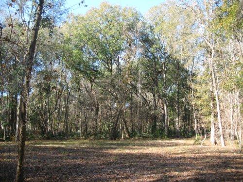 Big Oaks On 3 Acres : Kingsland : Camden County : Georgia