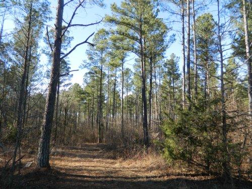 35.61 Ac Retreat Or Hunting Tract : Crawford : Oglethorpe County : Georgia