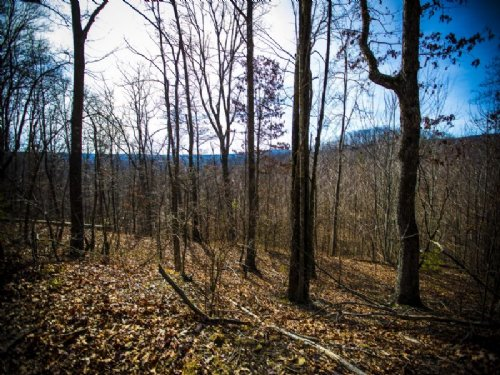 Bledsoe: Unrestricted Land 99 Acres : Spring City : Bledsoe County : Tennessee