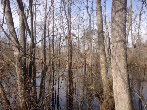 64.75 Acres : Red Springs : Robeson County : North Carolina