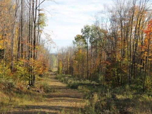 5+ Acres Bordered By State Land : Annsville : Oneida County : New York