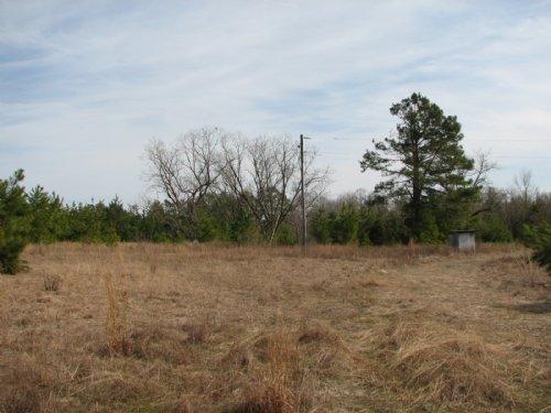 Rambling Branch : Sylvania : Screven County : Georgia