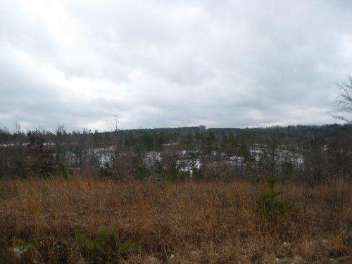 Campbell Tract Farms Lot : Meherrin : Prince Edward County : Virginia