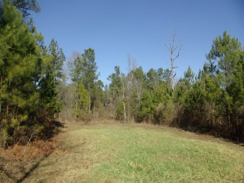 Green Field, Wooded, Lake Site : Ashville : Saint Clair County : Alabama