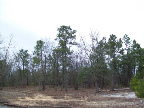 51.82 Acres : Bishopville : Lee County : South Carolina