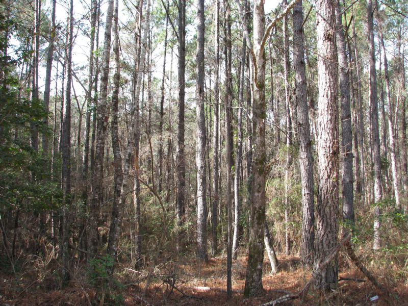 Franklin 33 : Monroeville : Monroe County : Alabama