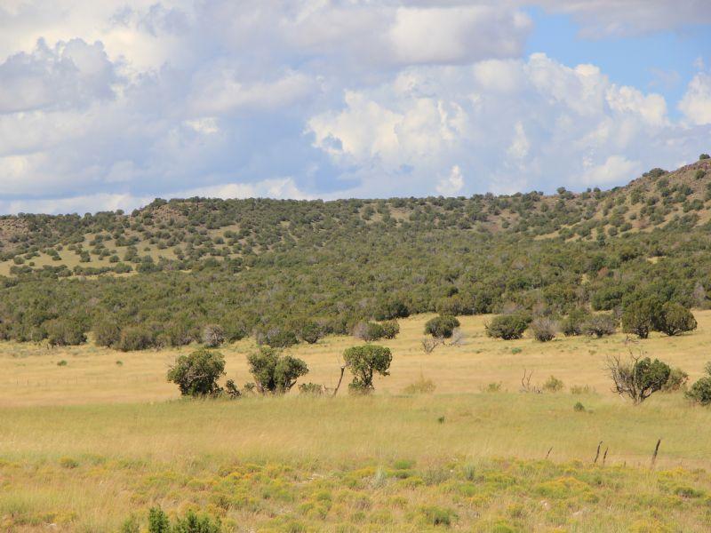 Woodland Valley Ranch : Saint Johns : Apache County : Arizona