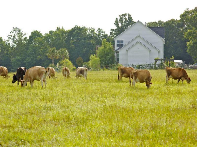 Award Winning Cheese Business : Elberton : Elbert County : Georgia