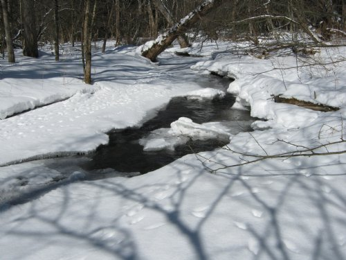 35 Wooded Acres With Stream : Sempronius : Cayuga County : New York