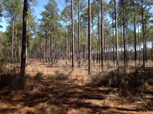 23.67 Acres Wooded / Residential : Mobile : Alabama
