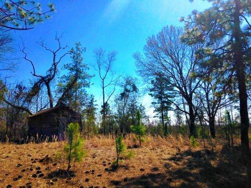 Tavern Tract : Statesboro : Bulloch County : Georgia