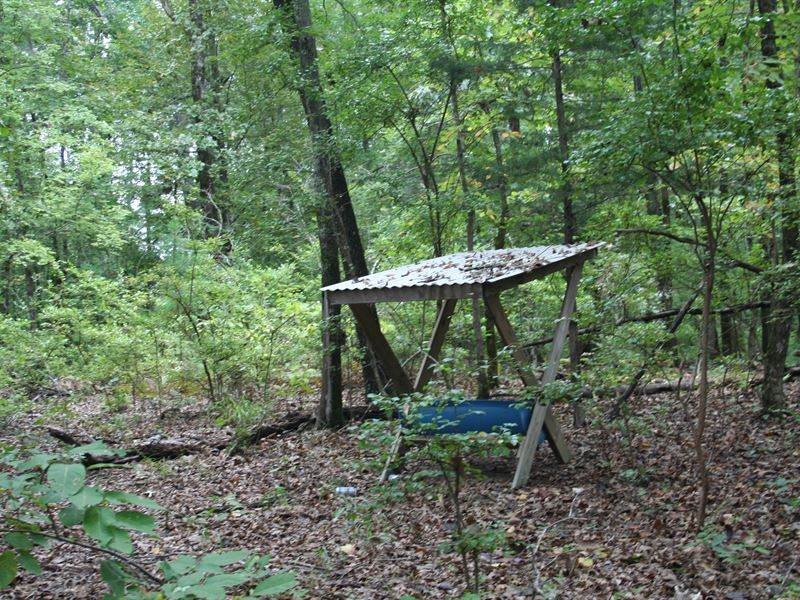 45-006 Dry Cedar Creek Hunting : Farmersville : Lowndes County : Alabama