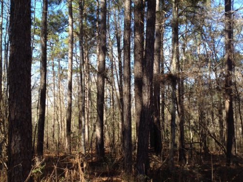 625 Acres : Purvis : Lamar County : Mississippi