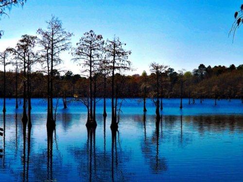 Longleaf Lake Tract : Portal : Bulloch County : Georgia