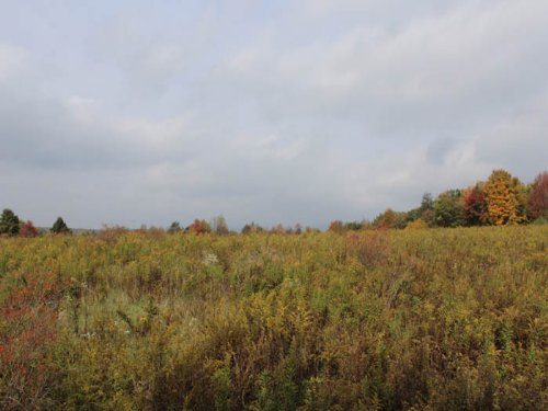 15 +/- Acres Of Land : Benton : Columbia County : Pennsylvania