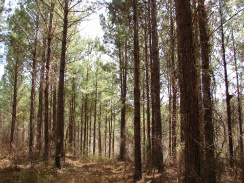 Pleasant Hunting, Timber, Homesite : Rockford : Coosa County : Alabama
