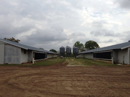 Updated Type A Poultry Houses : Banks : Pike County : Alabama