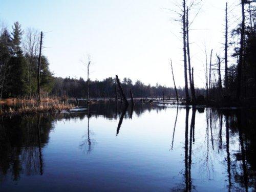 38+/- Acres Of Hunting Utopia : Constantia : Oswego County : New York